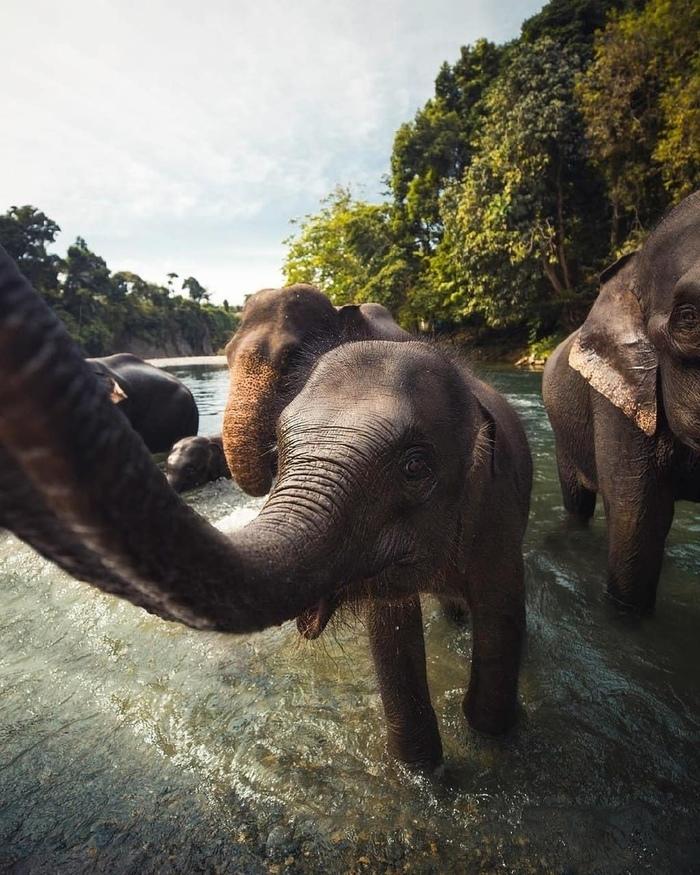Слоны тоже умеют делать селфи...