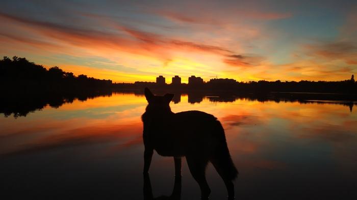 Бездомный пёс Начинающий фотограф, Собака, Закат, Хочу критики, Вода, Озеро, Город