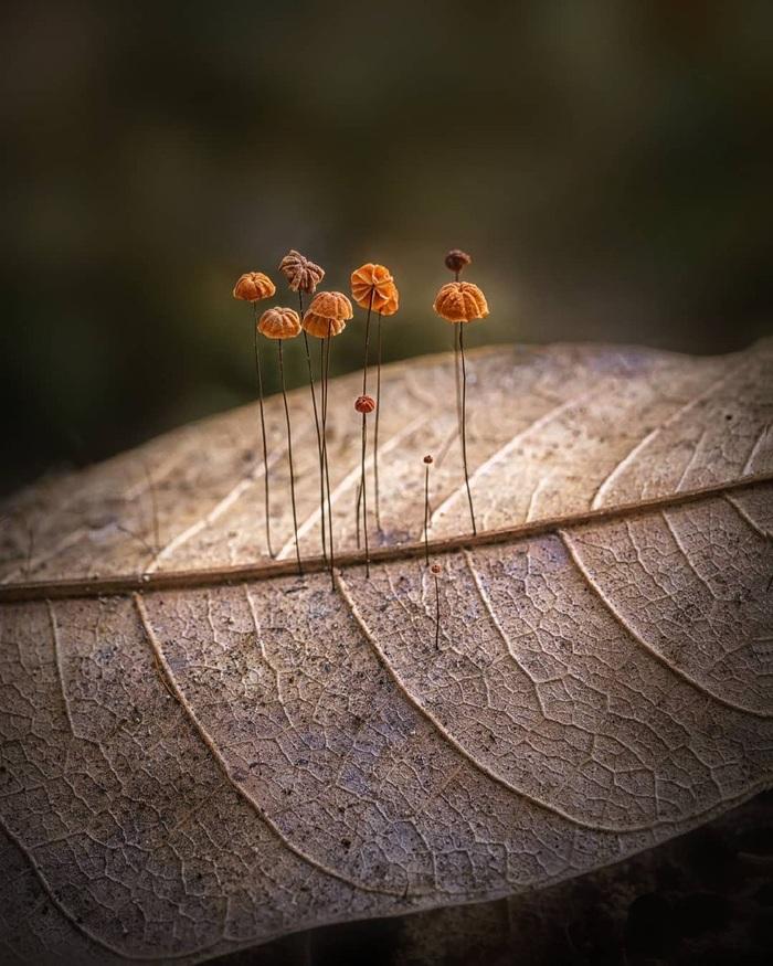 Грибы, растущие на спине умирающего листа