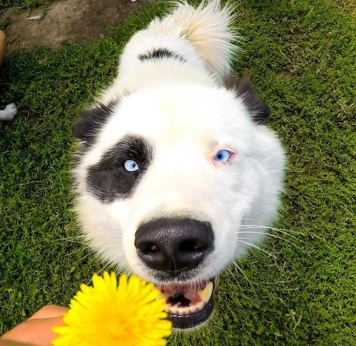 Когда тебе в первый раз подарили цветок.