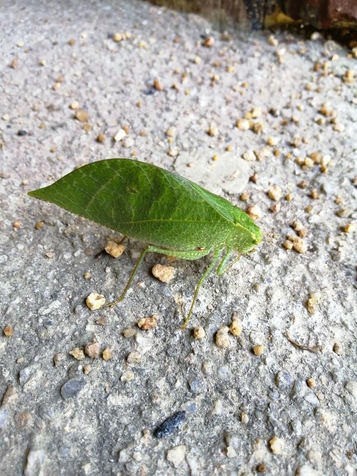 Бабочек Таиланда пост. Тропические бабочки, Таиланд, Насекомые, Ящерица, Длиннопост