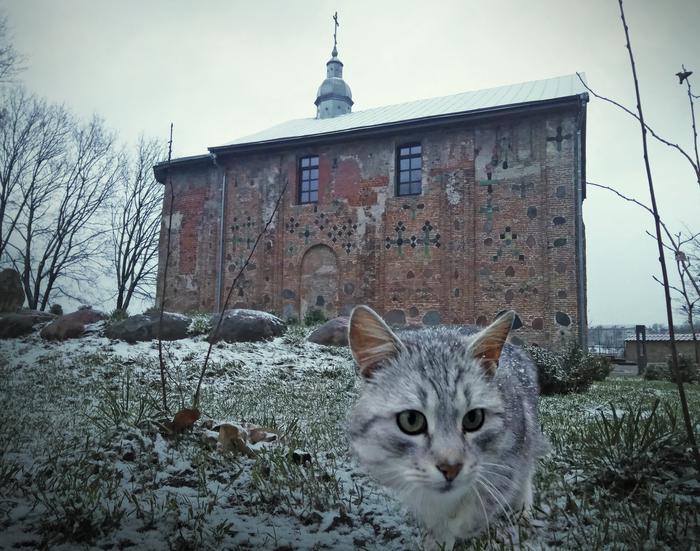 Гродненский кот Беларусь, Кот, Гродно