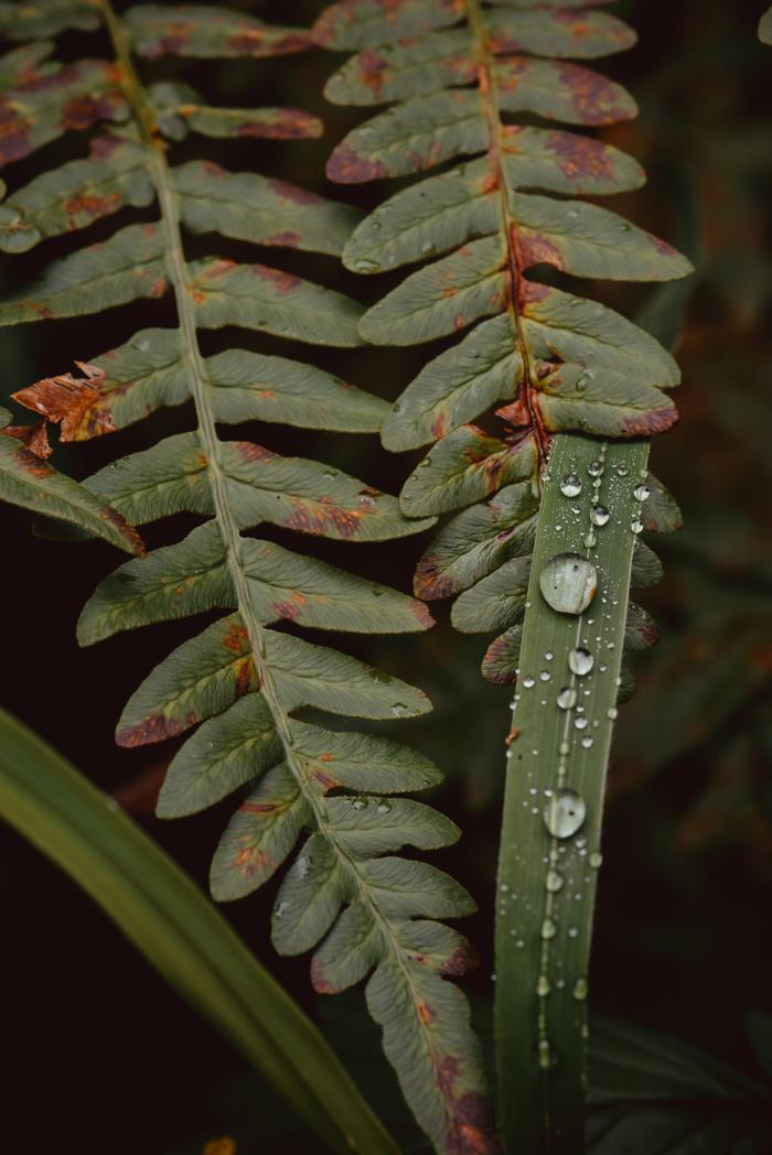 Ботаники пост Ботаника, Растения, Цветы, Мак, Чертополох, Природа, Фотография, Лес, Длиннопост
