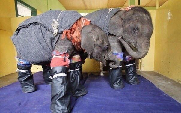 Про братьев наших больших... Слоны, Ветеринар, Помощь животным