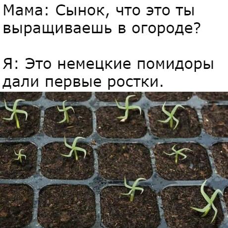 Мем #12