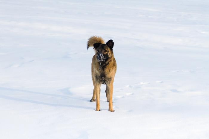 Чудесный рыжик ищет дом! Собака, Найденыш, Надежда, Челябинск, Длиннопост, В добрые руки, Без рейтинга