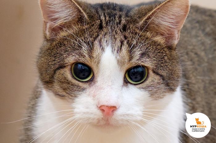 """""""Бывают ли среди котов трусишки?"""" – спросили нас однажды. """"Бывают."""" – ответили мы. Без рейтинга, В добрые руки, Приют муркоша, Приют для животных, Кот, Длиннопост, Помощь животным, Москва"""