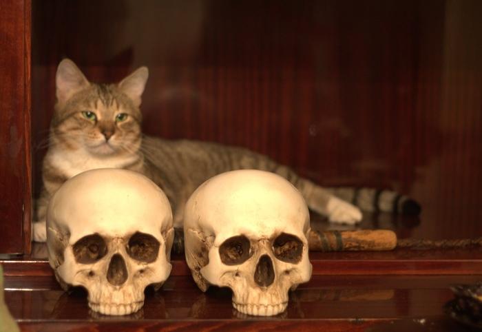 Котик :) Кот, Череп, Нагайка, Гипсовая работа