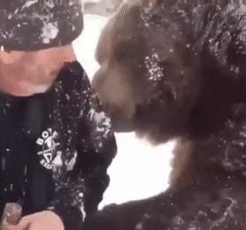 Слышь, сюда давай! Медведь, Зима, Будь мужиком, Обнимашки, Гифка
