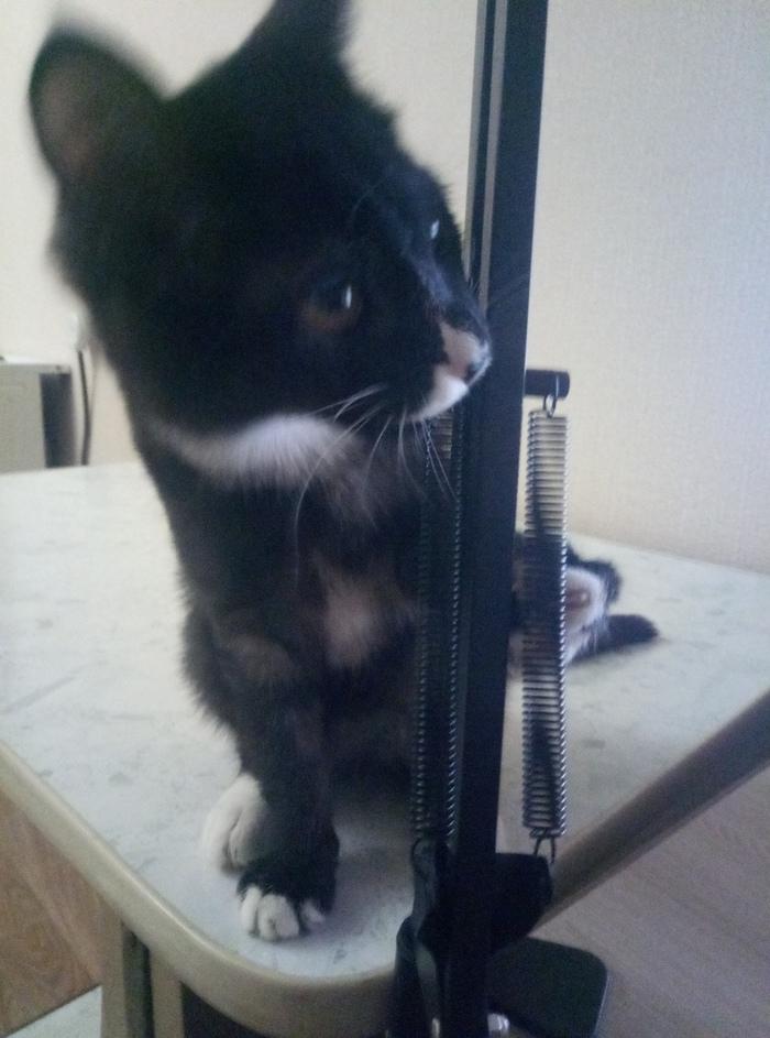 Срочно, помогите пристроить котенка, Новосибирск Без рейтинга, Котята, Аллергия, Новосибирск, Срочно, Длиннопост, Кот, В добрые руки