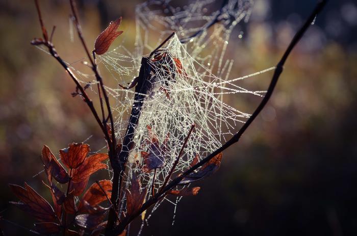 Горное утро. Октябрь, Алтай. Начинающий фотограф, Горный Алтай, Фотография, Доброе утро, Горы
