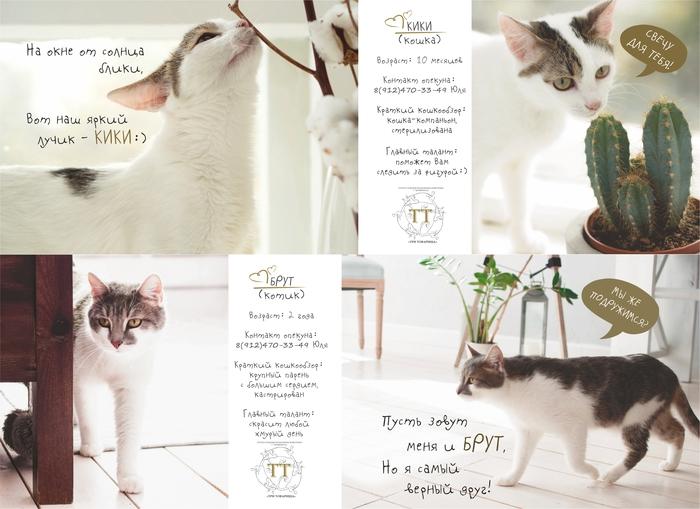 Каталог котиков приюта Кот, Котомафия, Котята, Фотография, Приют для животных, Приют Три Товарища, Приют, Милота, Длиннопост