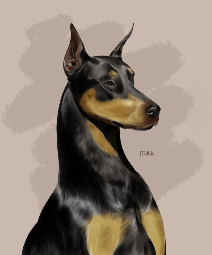 Рисую всяких собачек тут Арт, Скетч, Собака, Пэнси, Длиннопост, Доберман, Анималистика, Рисунок, Цифровой рисунок
