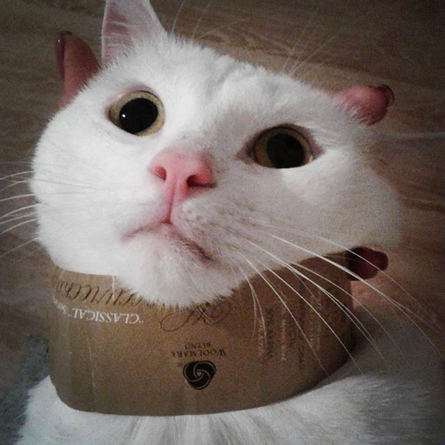 Вопросов у меня больше, чем ответов Кот, Глаза, Животные