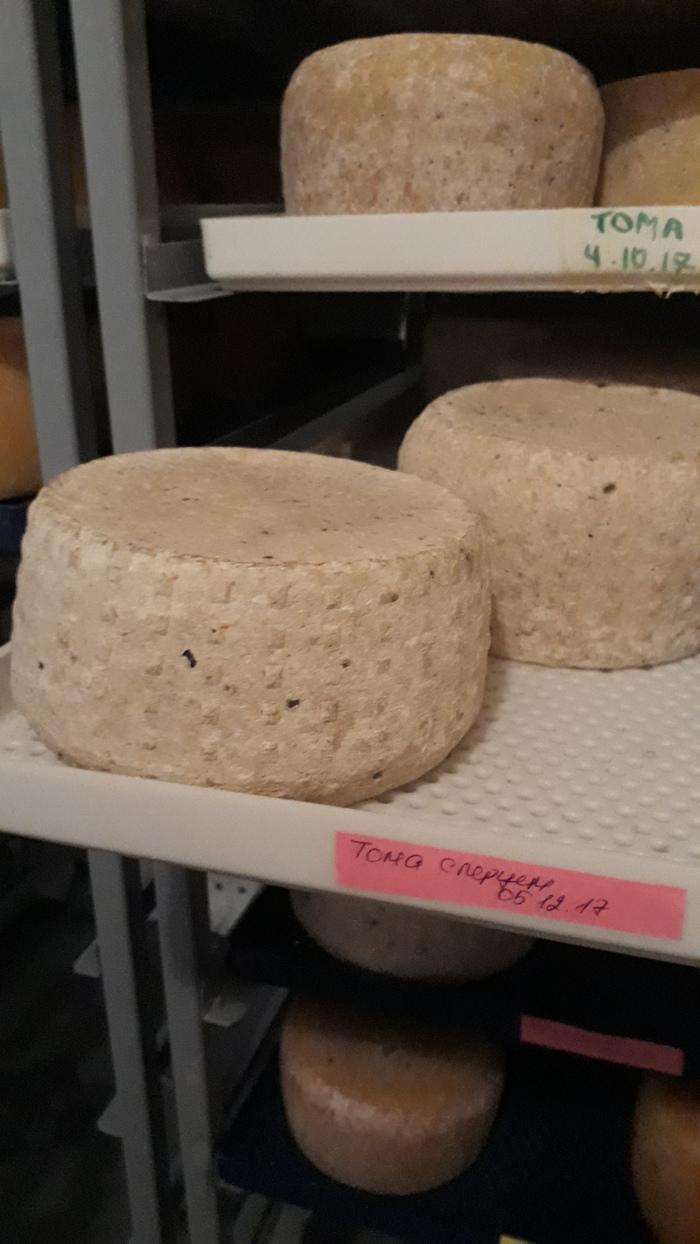 Обучение сыроварению Сыр, Сыроделие, Вкусняшки, Длиннопост