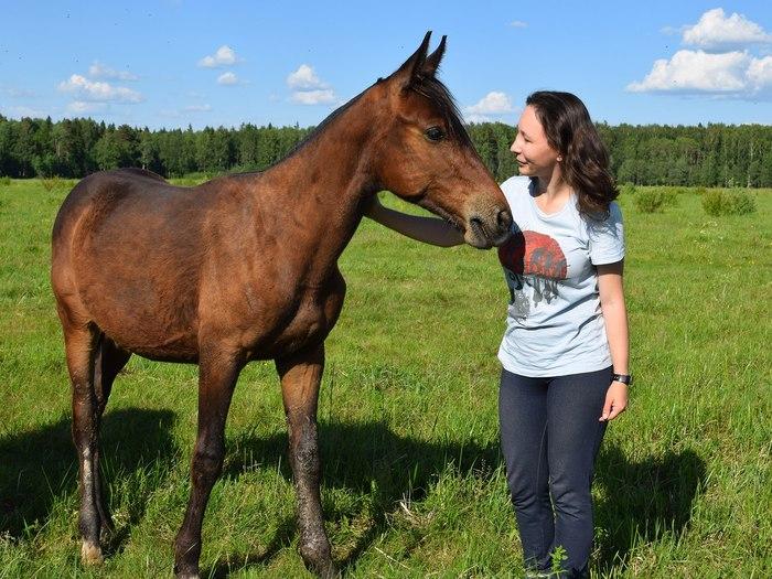 Как быстро растут лошади? Лошади, Милота, Животные, Видео, Длиннопост