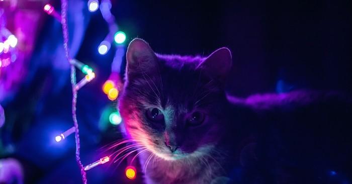 Когда хотел сфоткать кота у гирлянды Кот, Ожидание и реальность, Гирлянда