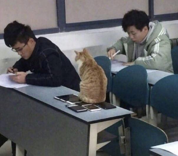 Помощник учителя следит, чтоб не списывали