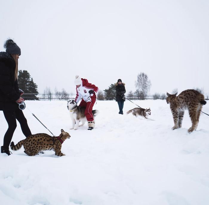 Настоящая Россия.  Хотя медведя не хватает.