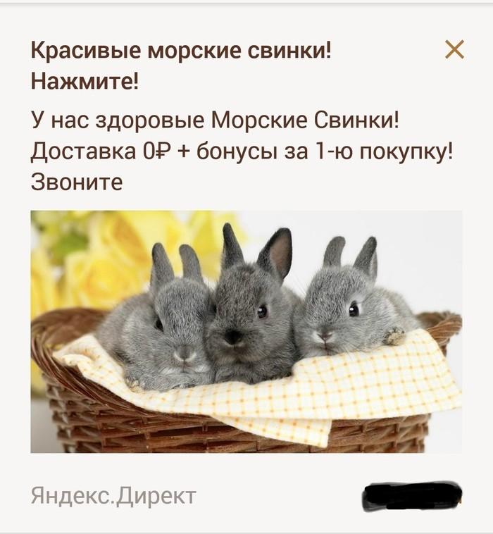 Ну очень красивые! Реклама, Животные, Морская свинка, Кролик, Ошибка