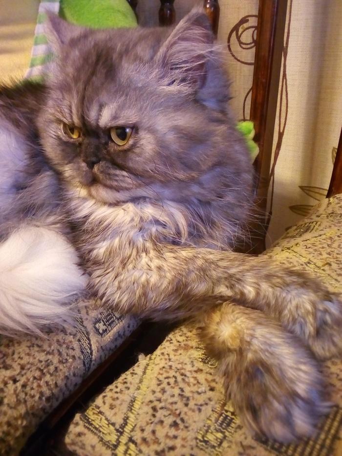 Утренние лапки;) Кот, Котомафия, Длиннопост