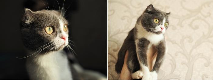 Буся, кошка спасенная из ужасных условий, нашла новый дом! Кот, Котомафия, Спасение животных, Приют для животных, Приют Три Товарища, Челябинск, Длиннопост