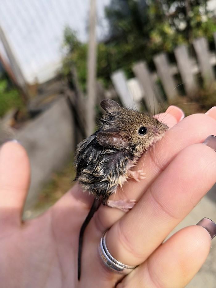 Мышонок Мышь, Частный дом, Спасение, Длиннопост