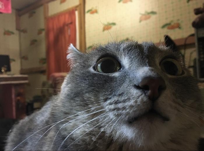 Как мы всех вокруг развеселили Кот, Веселье, Длиннопост