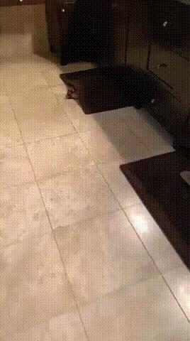 Полы с подогревом + кот