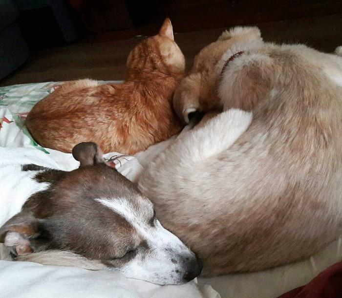 Чужих детей не бывает) Коты и собаки вместе, Собака, Домашние животные, Длиннопост, Кот