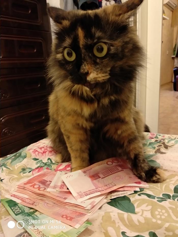 Каджит распродал свой товар Кот, Каджит, Длиннопост
