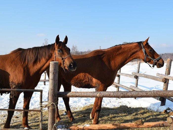 Новогоднее чудо в конюшне. Как назвать малышку? Лошади, Жеребенок, Животные, Милота, Пушистый, Конюшня, Приют, Видео, Длиннопост