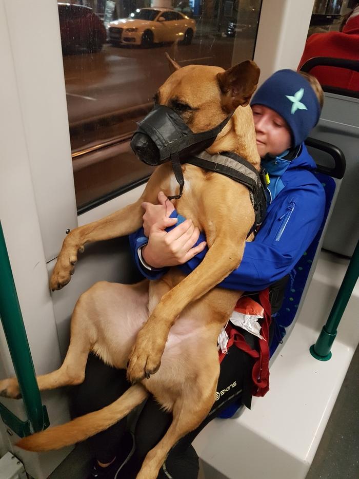 Послушный мальчик Собака, Послушание, Общественный транспорт