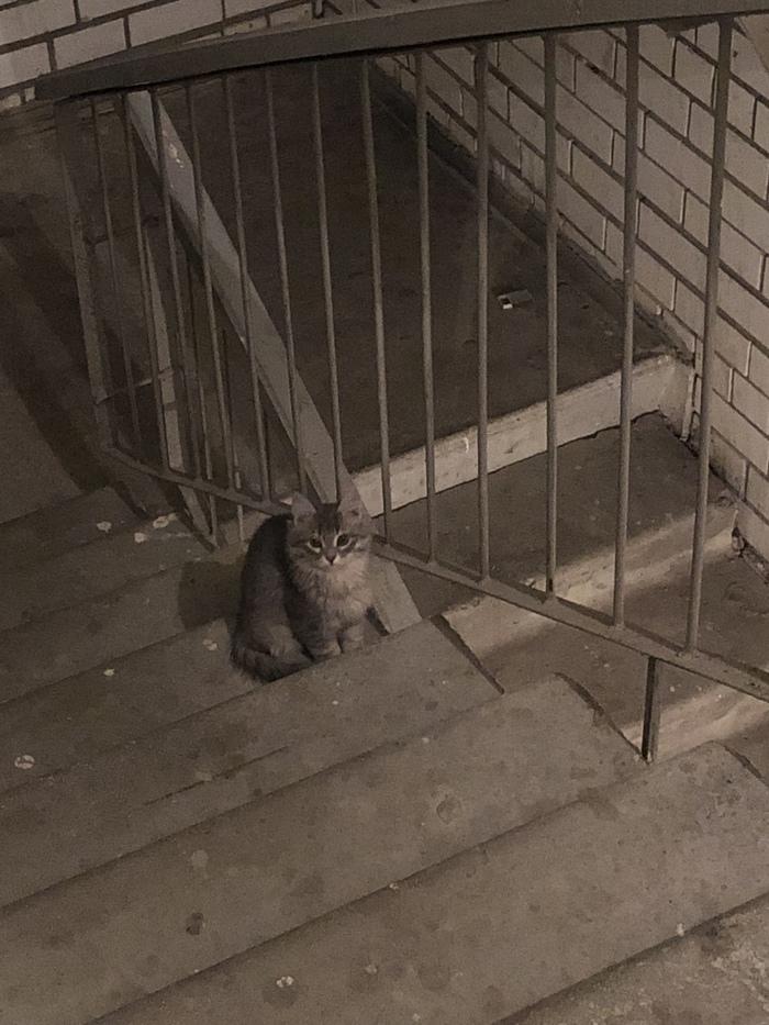 Котята в добрые руки Саратов Без рейтинга, Кот, Саратов, Длиннопост