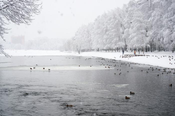 Прогулка по паркам после снегопада Велосипед, Зима, Снег, Покатушки, Москва, Длиннопост