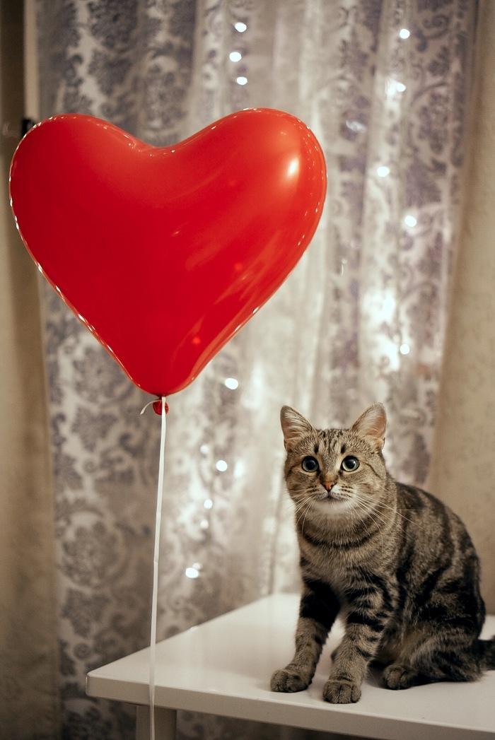 С Днём Святого Валентина! Кот, Шарик, Длиннопост, Домашние животные