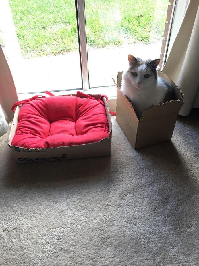 Подушка хороша, но коробка лучше