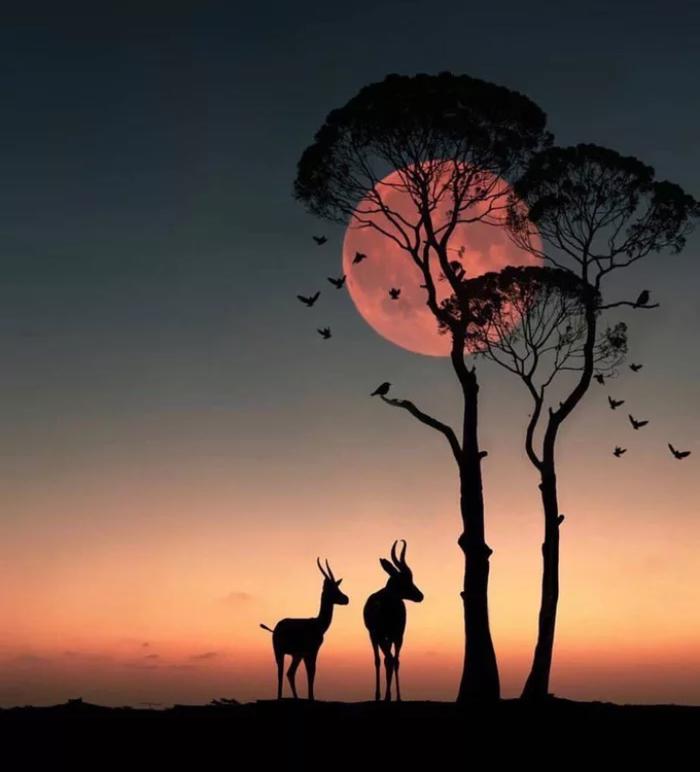 Закат солнца в Африке.