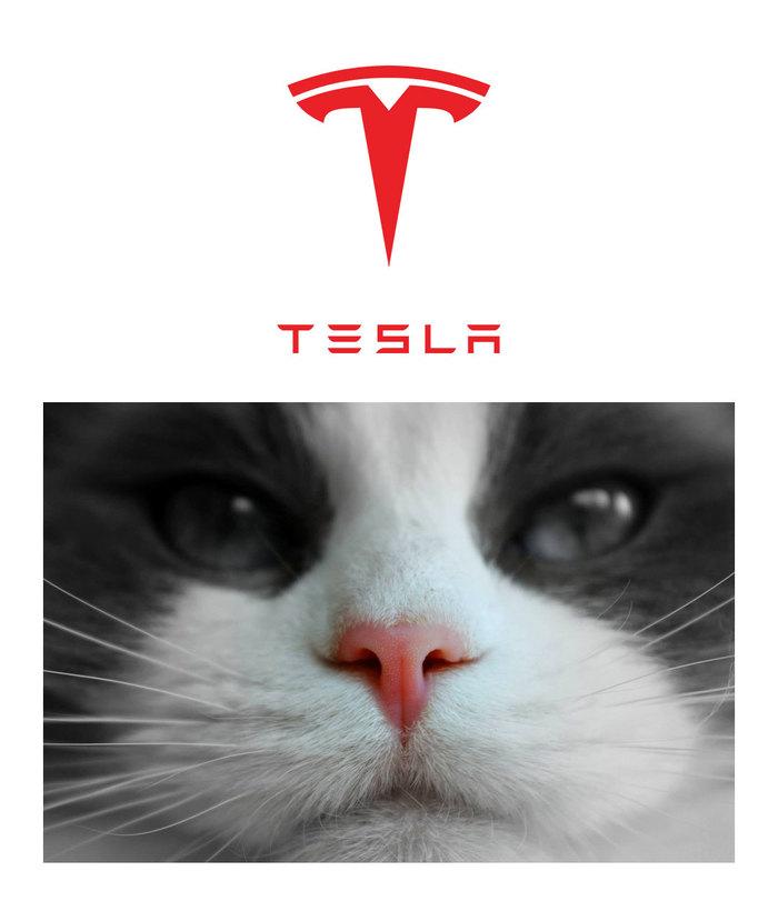 Лого Тесла это нос кота. Теперь попробуй это развидеть!