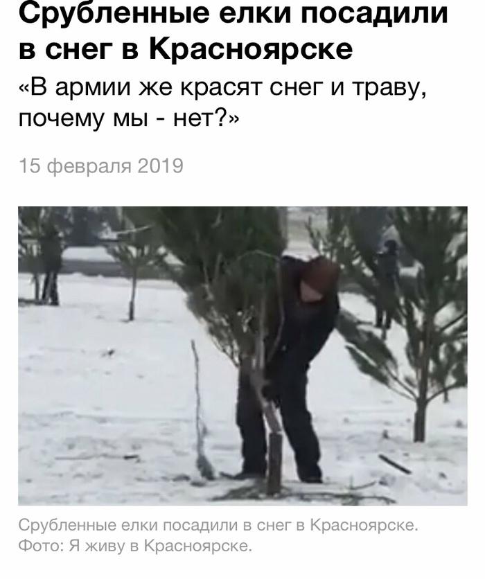 Елочка мне нравится... Красноярск, Позор, Елки, Озеленение, Длиннопост