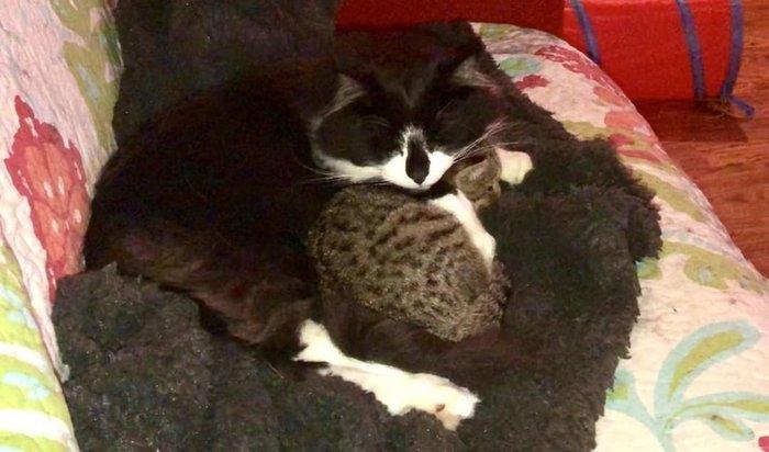 Спасённый котёнок находит верного друга. Кот, Найденыш, Доброта, Дружба, Видео, Длиннопост