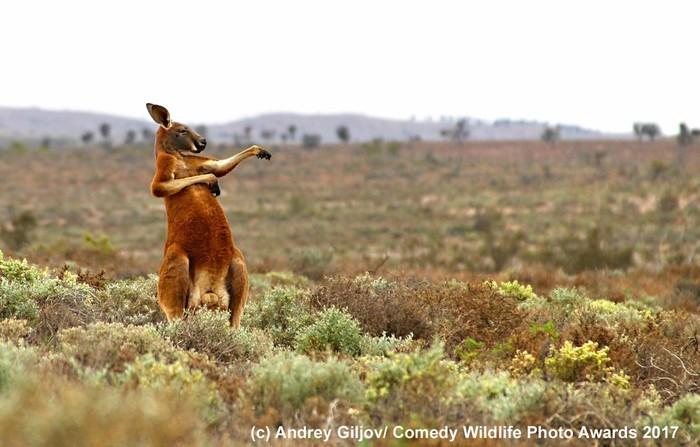 Funny Animals Фотография, Животные, Медведь, Выдра, Обезьяна, Сова, Гиена, Длиннопост, Кролик