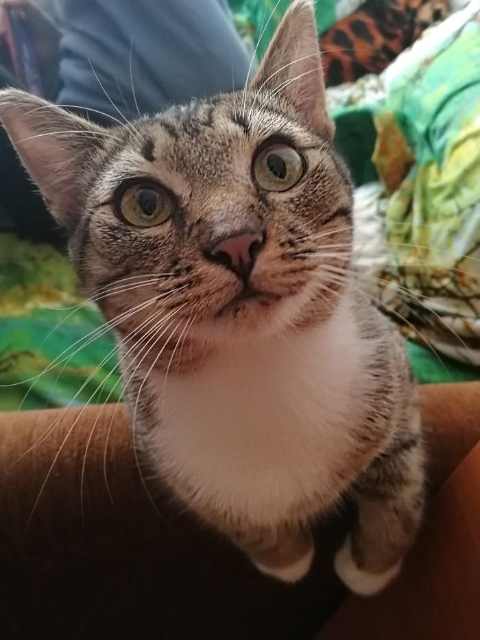 Когда кот узнал, что нашли его тайник Кот, Домашние животные, Тайник, Длиннопост