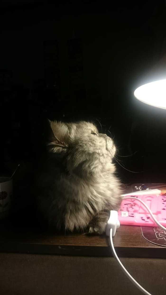 Немного кота, ламп и лап) Кот, Милота, Длиннопост