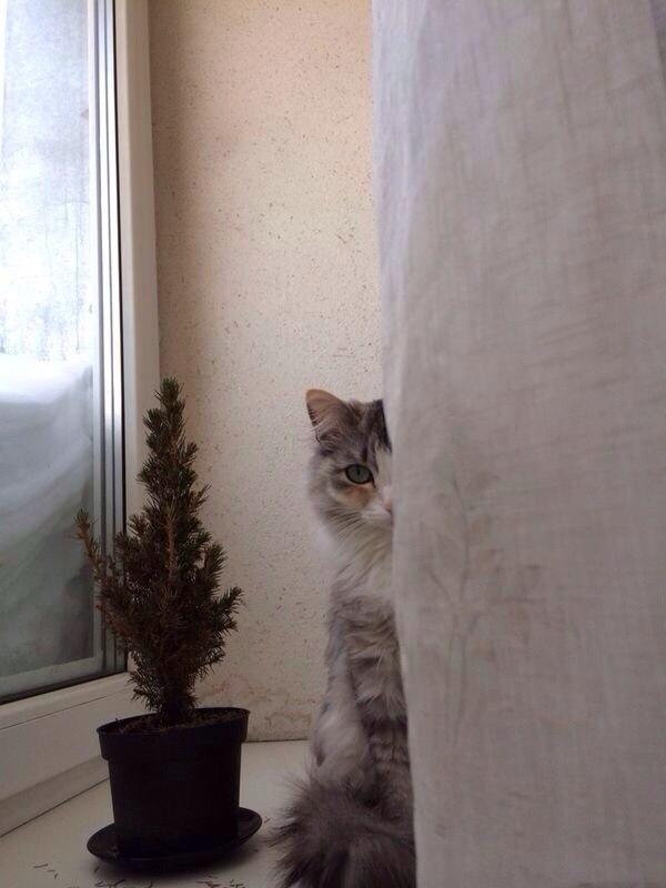 Это Коша - первая из сорока кошек для сильной и независимой меня. Кот, Сугроб, Подоконник, Домашние животные
