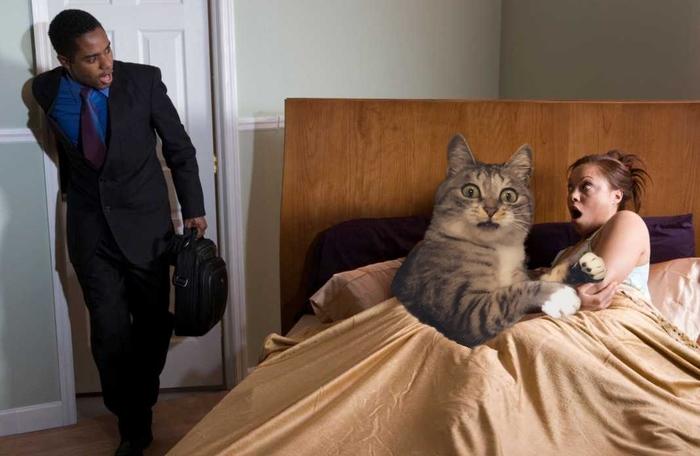 """Фотожабы """"Ты чего так рано пришел"""" Reddit, Photoshop, Psbattle, Фотожаба, Длиннопост, Кот, Коробка, Коробка и кот"""