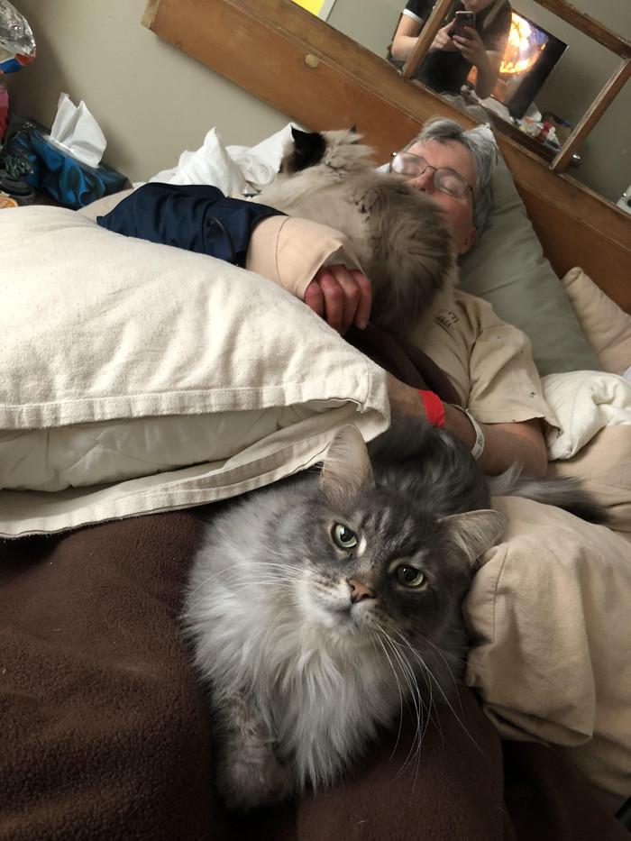 Отца сбила машина и он повредил запястье. Ему нужен сон, покой и вот эти 2 пушистых доктора.