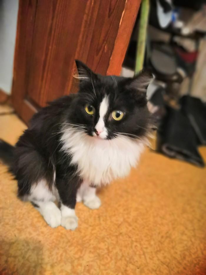 Немного упоротая, но невероятно милая кошка) Котомафия, Животные, Кот, Домашние животные, Упоротость