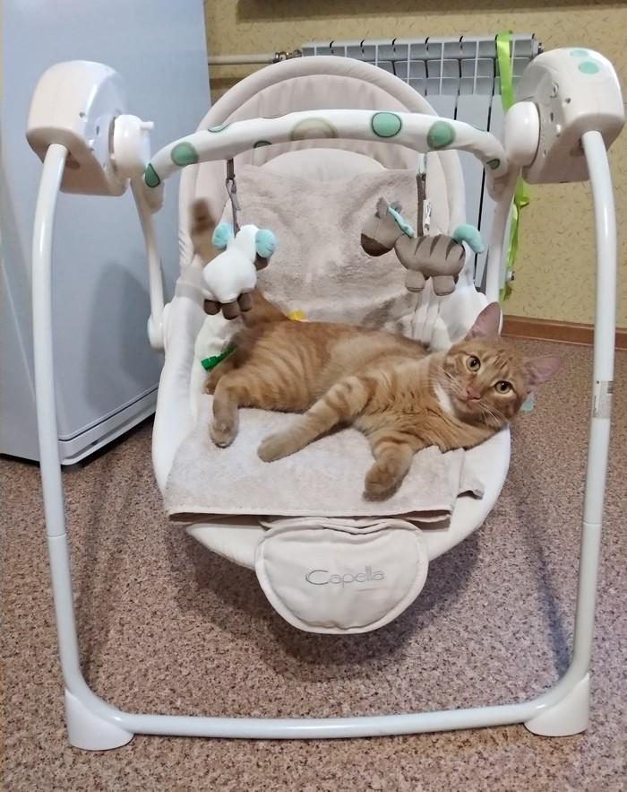 Здесь все мое Кот, Котомафия, Наглая морда, Кошачий ребёнок