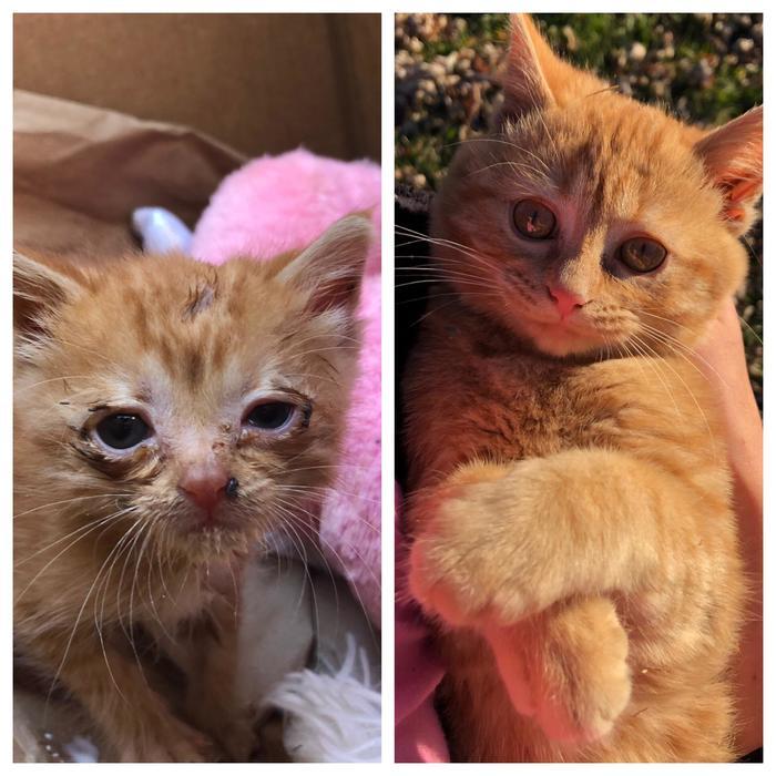 Месяц назад мы подобрали на улице кошку.Она была такая больная и крошечная, но теперь она счастлива и здорова!